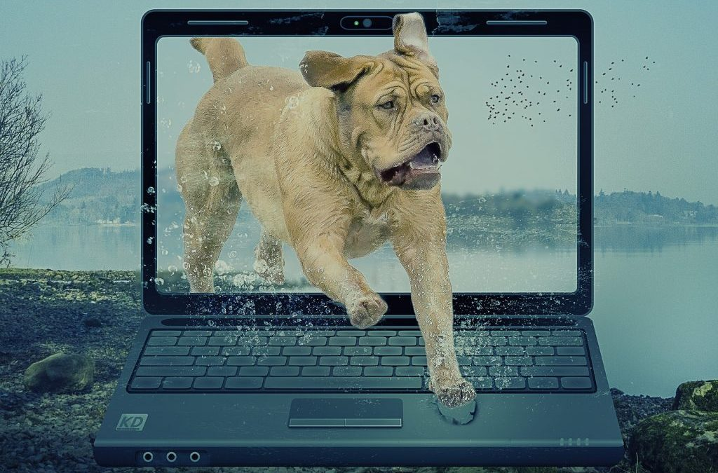 Overwhelmed by record keeping? A short review of 10 tech options for animal trainers to use